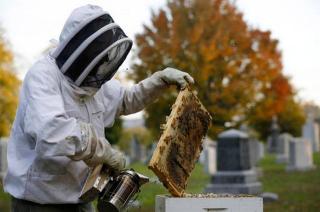 485Cemetery Beekeepers